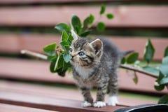 摆在长凳的可爱的小猫 免版税图库摄影