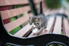 摆在长凳的可爱的小猫 免版税库存照片