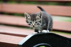 摆在长凳的可爱的小猫 图库摄影