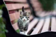 摆在长凳的可爱的小猫 库存图片