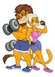 摆在2的狮子和雌狮 库存图片