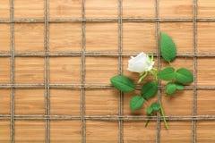 摆正在一朵木背景和白色玫瑰的被排行的绳索样式与叶子被交织在它之间 自然题材的纹理 免版税库存照片