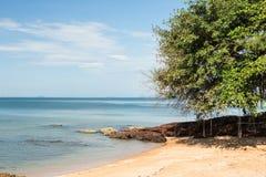 摇摆和树在海滩 免版税图库摄影