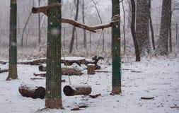 摇摆在一个公园在冬天 免版税库存照片