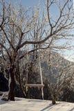 摇摆在森林里在一个冬天晚上 免版税库存照片