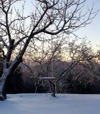 摇摆在森林里在一个冬天晚上 免版税库存图片
