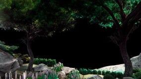 摇摆在阿尔法通道的风美丽的绿色欧洲树 使成环的现实动画 股票录像