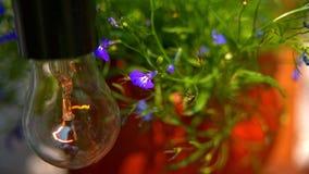 摇摆在风的小的紫色花 影视素材