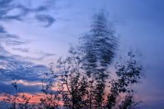 摇摆在风的树在黄昏 库存照片