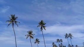 摇摆在风的棕榈树 股票视频
