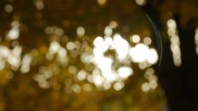 摇摆在风的黄色秋天叶子 股票视频