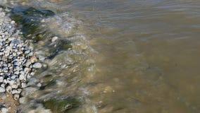 摇摆在水流程的绿色海草 股票录像