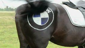 摇摆有商标的马的后面部分尾巴在它的臀部 影视素材