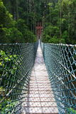 摇摆桥梁Temburong国家公园 库存照片