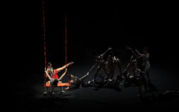 摇摆现代芭蕾:中华的金莲花 库存图片