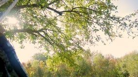 摇摆的愉快的儿童女孩在日落秋天 使用在自然步行的秋天的小孩 获得的小女孩乐趣  股票录像
