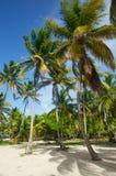 摇摆的棕榈树立场  图库摄影