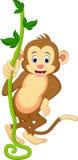摇摆从藤的一只逗人喜爱的猴子 免版税库存图片