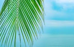 摇晃的棕榈分支 免版税图库摄影