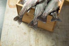 摇晃从木箱的新鲜的鳟鱼尾 库存图片