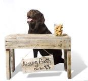 摊britley巧克力英国亲吻的实验室 库存照片