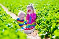 摘在农场的孩子新鲜的草莓 库存照片
