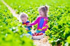 摘在农场的孩子新鲜的草莓 免版税库存照片