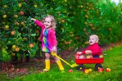 摘在农场的孩子苹果 免版税库存图片