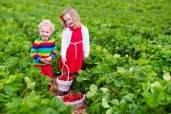 摘在农田的孩子草莓 免版税库存照片