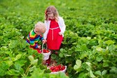 摘在农田的孩子草莓 免版税库存图片