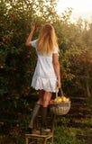 摘成熟有机苹果的美丽的少妇 免版税库存照片