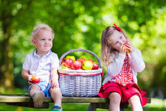 摘新鲜的苹果的孩子 免版税库存照片