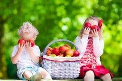 摘新鲜的苹果的孩子 库存照片