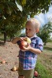 摘红色和绿色苹果的孩子 免版税图库摄影