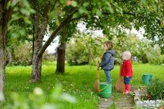 摘苹果的两个小女孩在庭院里 免版税库存图片