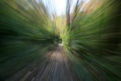 摘要上色森林 免版税库存照片