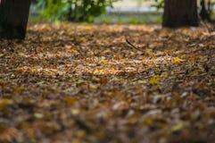 摘要叶子在秋天适当作为背景 库存照片