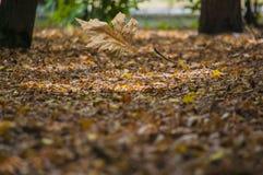 摘要叶子在秋天适当作为背景 库存图片