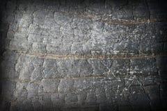 摘要困厄的被烧的木头 库存图片