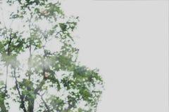 摘要树绿色叶子的被弄脏的图象 库存照片