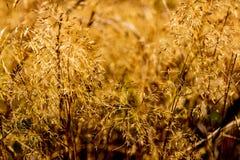 摘要模糊的干燥夏天领域草 免版税库存图片