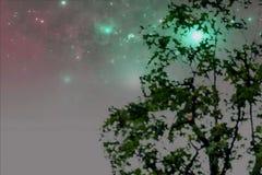 摘要绿色叶子背景的被弄脏的图象 免版税图库摄影