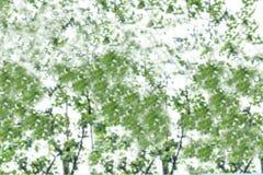 摘要绿色叶子背景的被弄脏的图象 免版税库存照片