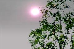 摘要绿色叶子背景的被弄脏的图象 图库摄影