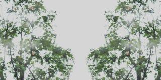 摘要绿色叶子背景的被弄脏的图象 免版税库存图片