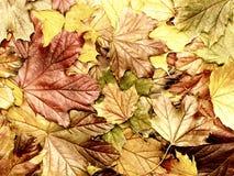 摘要色的秋叶 免版税库存图片