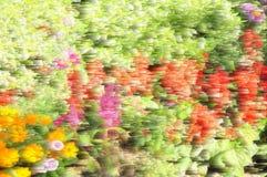 摘要被弄脏的五颜六色花卉 免版税库存图片