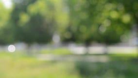 摘要被弄脏的背景树和草inpark 股票录像