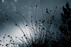 摘要,在沼泽池塘表面的单色cottongrass反射蓝色口气的 沼泽地自然植物群  库存图片