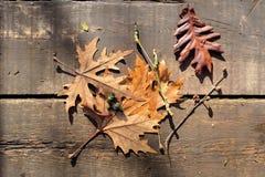摘要,秋天背景下落的,干燥platan树离开 免版税库存图片